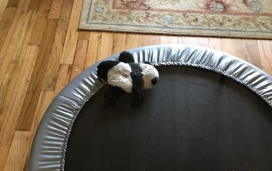 panda on trampoline Sat