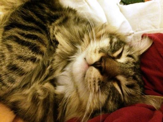 sleeping up close