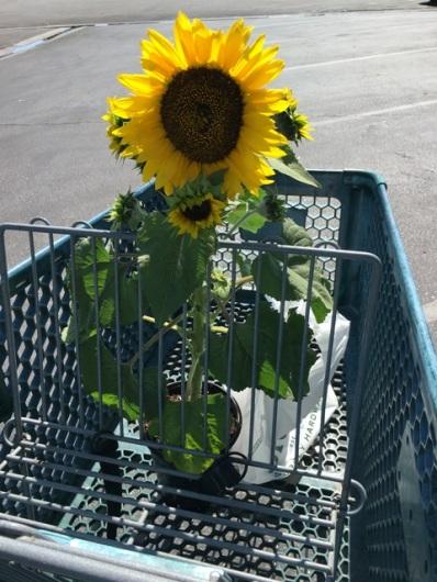 Sunny in basket