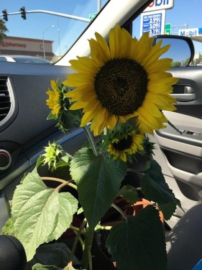 Sunny in car