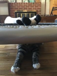 under trampoline feet