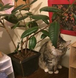 behind plant