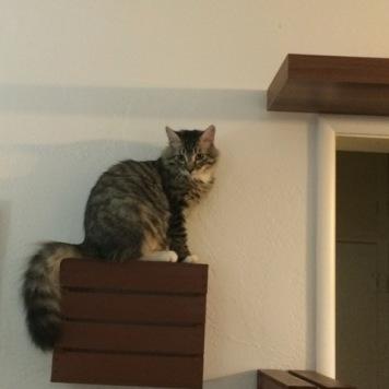 sitting on shelf 2