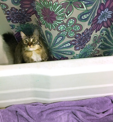 peeking out of tub 9 pm