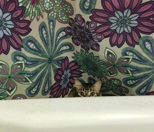 peeking out of tub
