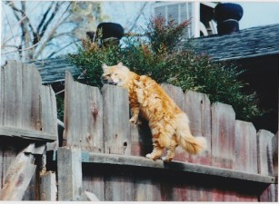Scamper on fence 2