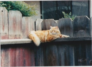 scamper on fence 3