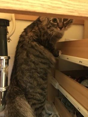 Foster under sink