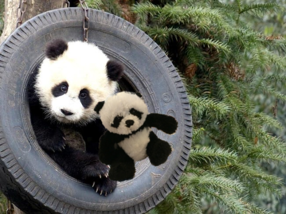 panda in tire2