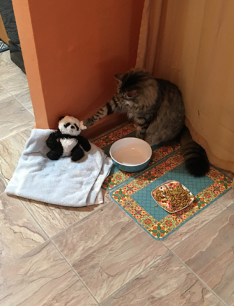 paw on panda