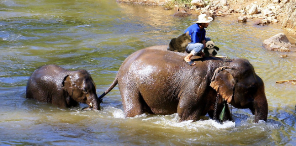 on elephant in water2