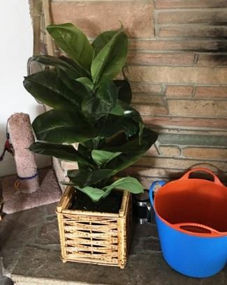 plastic plant tall