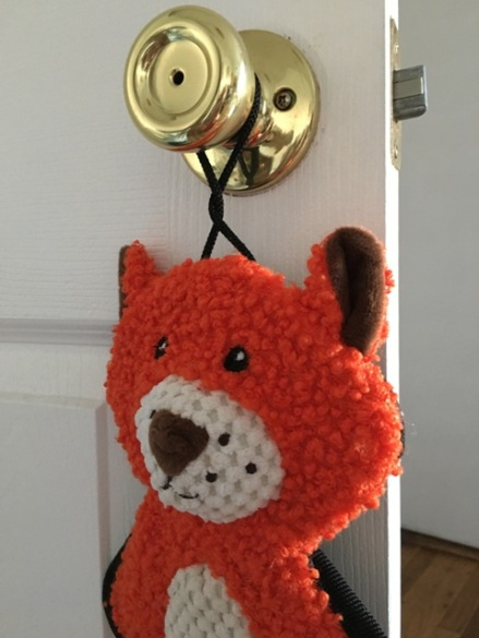 fox on door