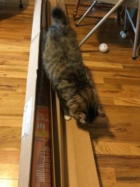 inspecting box