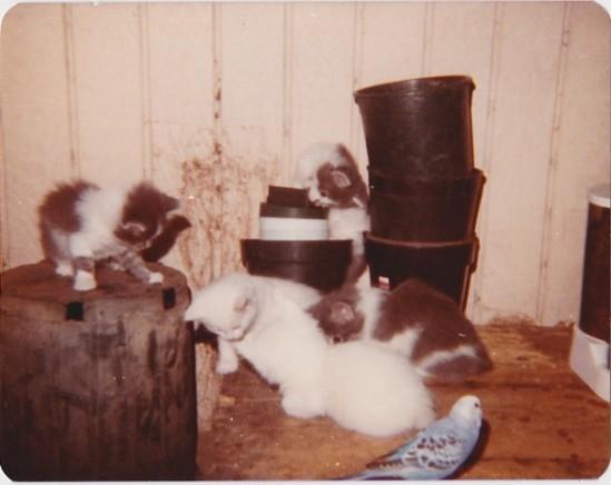 kittens with Fenwick