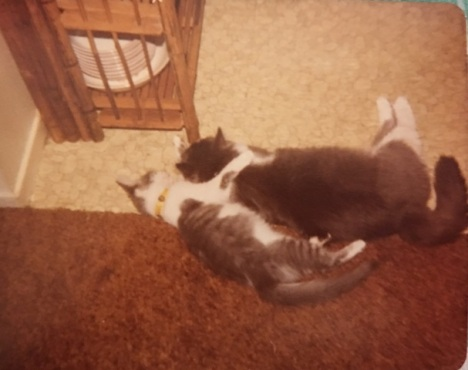 punkin and heidi sleeping
