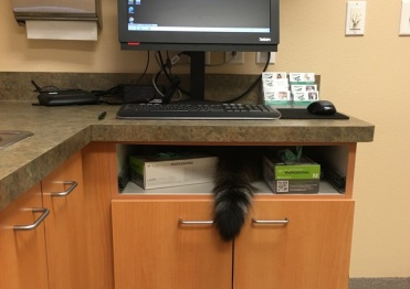 tail at vet