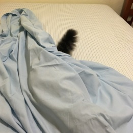 tail under sheet