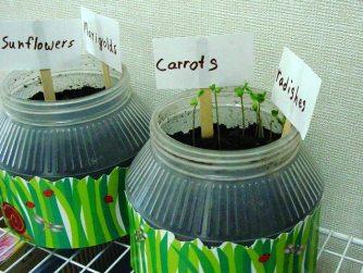 ec 05 carrots