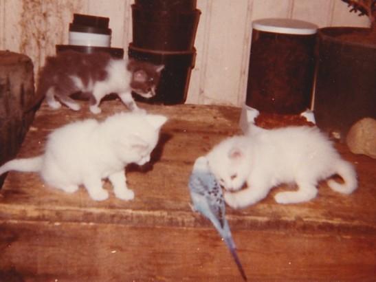 Fenwick and white kitten