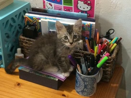 foster by pencils