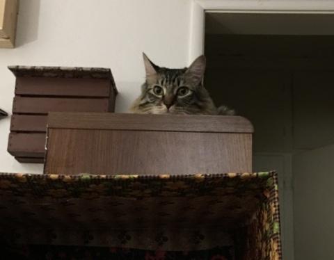 looking over shelf