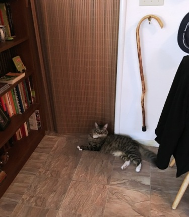 lying by door