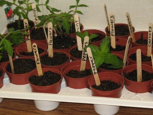 misc plants