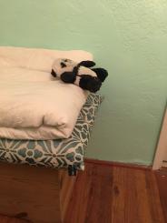 panda slides down2