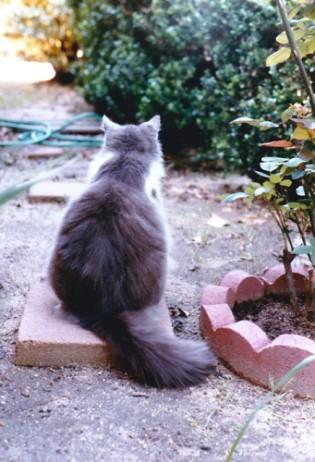 punkin in garden