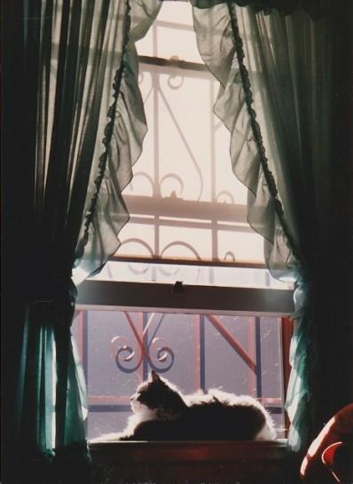 punkin windowsill