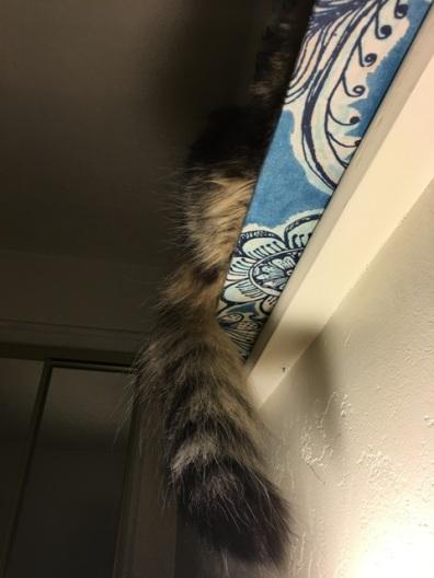 tail on shelf