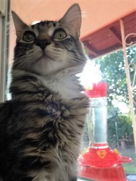 humming watch in window