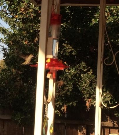 hummingbird close up 2