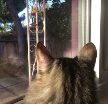 hummingbird watch 5
