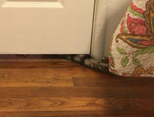 paw under door 2