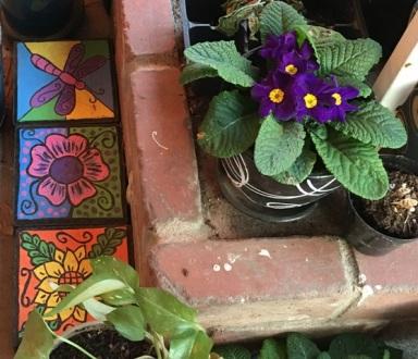 primrose close up 2