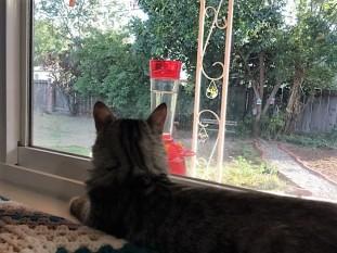 watching hummingbird