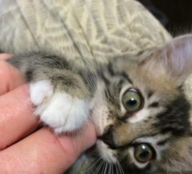 biting hand