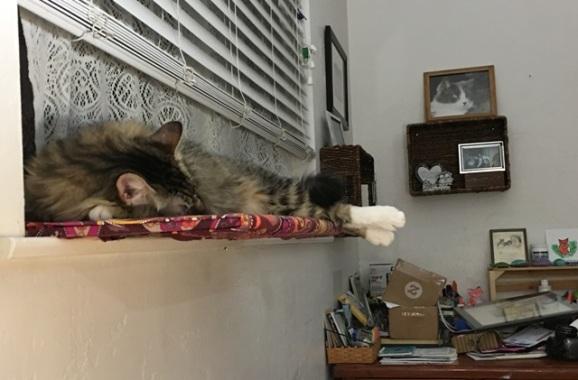 feet off of shelf