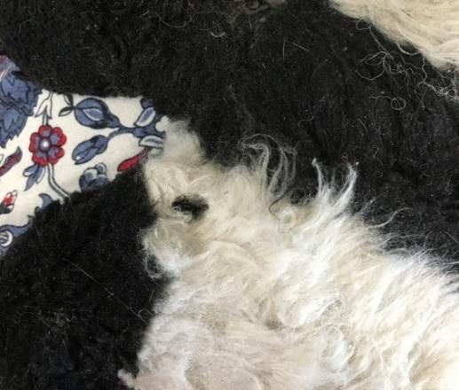 hole in panda