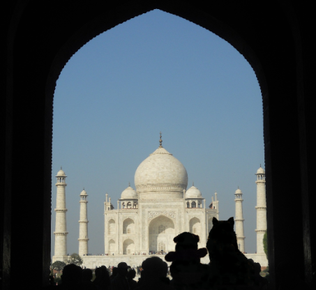 looking at taj2