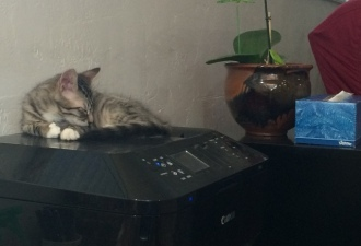 sleeping on printer