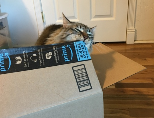 biting box