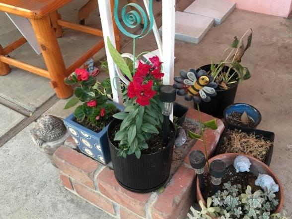 not dry plants