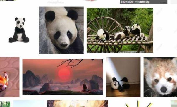 panda in search