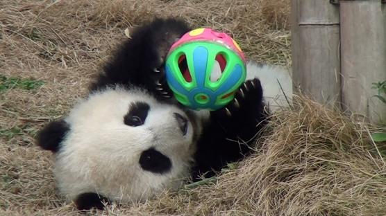 panda with ball