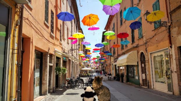 looking at umbrellas sm