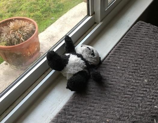 panda kicking back