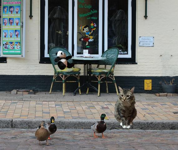 talking to ducks sm